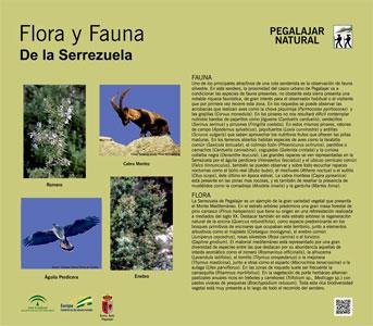Flora y Fauna de la Serrezuela