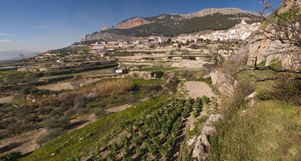 Vista General de la Huerta